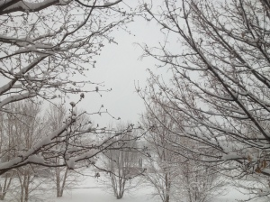 Snow at Raccoon Creek: photography by Noelle