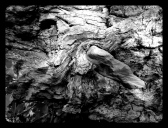 The Embrace: Rock and Tree: Photography by Noelle