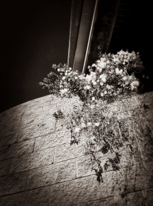 Steel, Brick, Flower, Petal: Photography by Noelle