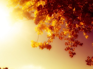 Mystical autumn: Photography by Noelle