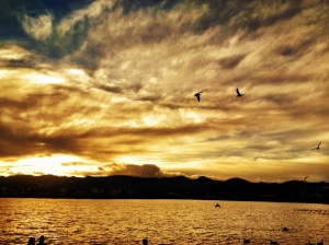 Seagulls at Johnson Lake: Photography by Noelle