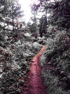 Path Through a Wood: Photo by Noelle at Roxborough State Park