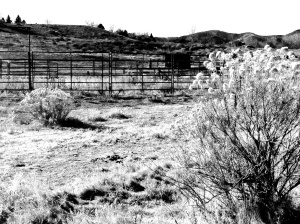 Vanishing Horse Arena: Photo by Noelle