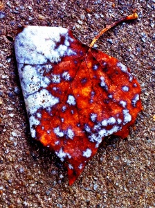 Dead Leaf Beauty: Photo by Noelle