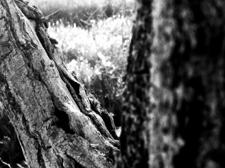 Old limb: Photo by Noelle