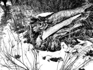Dead Tree at Chatfield Reservoir: photo by Noelle