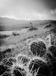 Prickly Pear at Bear Creek Lake: Photo by Noelle
