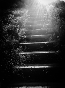 Stair hike at Mount Glennon Park: Photo by Noelle