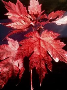 Fall foliage at Dancing Willows