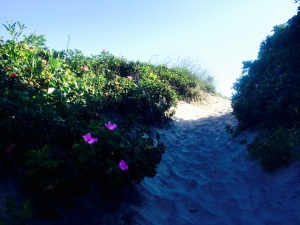 State Beach, Block Island, Rhode Island: Photos by Noelle
