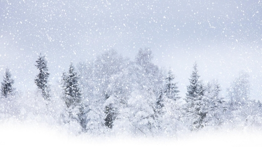 snowfall_winter_precipitation_trees_60966_1920x1080